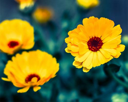 Варианты создание цветочного магазина в сети